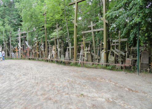 las-krzyzy