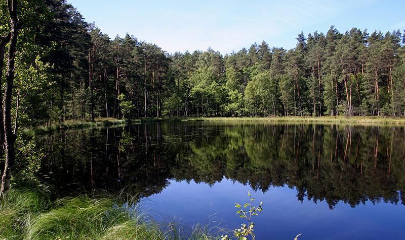 Bory-Tucholskie-Wycieczka